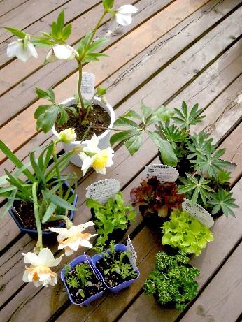 植物色々~