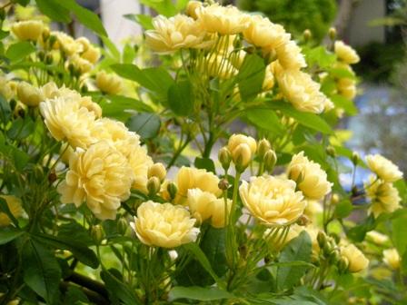 my-garden 07