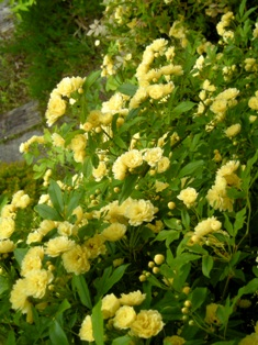my-garden 11