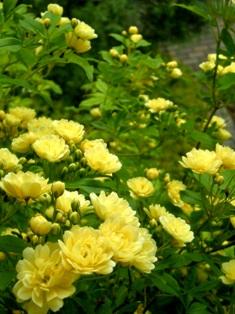 my-garden 0012