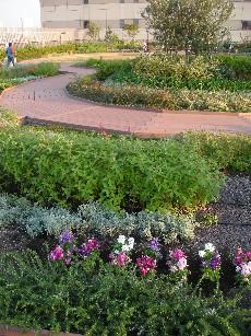 my-garden1.jpg