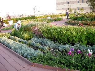 my-garden6.jpg