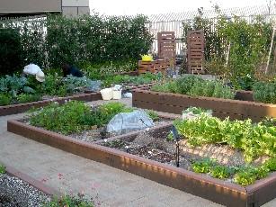 my-garden7.jpg