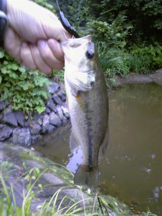 釣果22cm2009.9.2