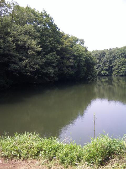 初の野池もゲ<br />キチン