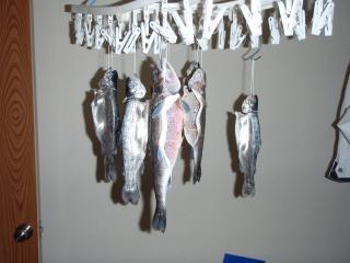最近・魚・べー