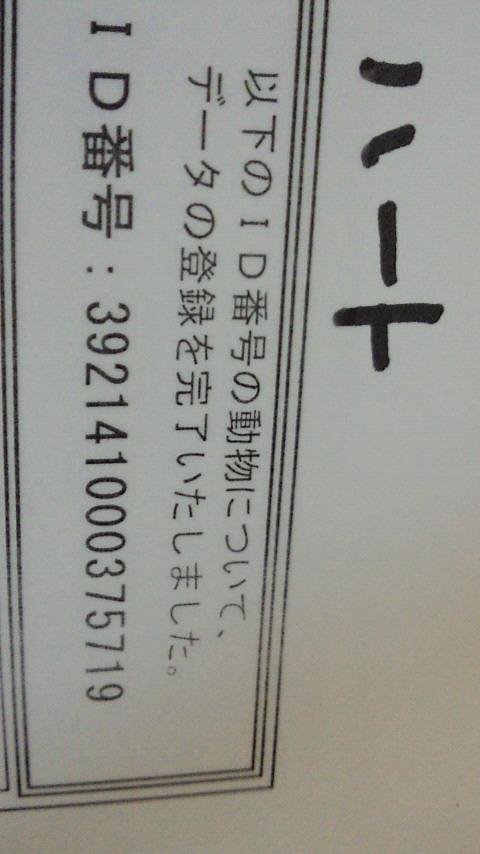 NEC_4653.jpg