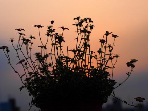 夕日とlコラボ