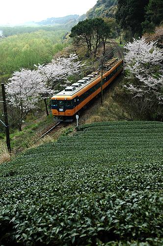 spring_005.jpg