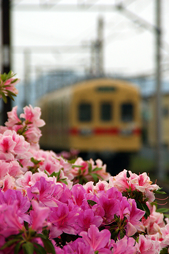 spring_011.jpg