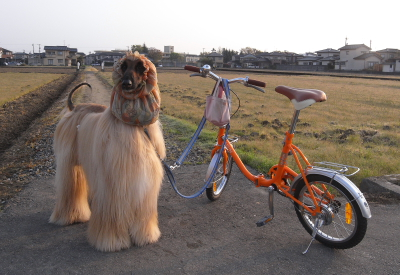 cycle1000