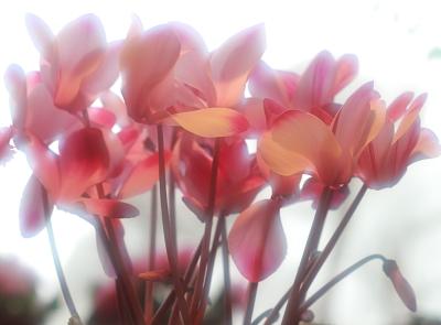 flower1006