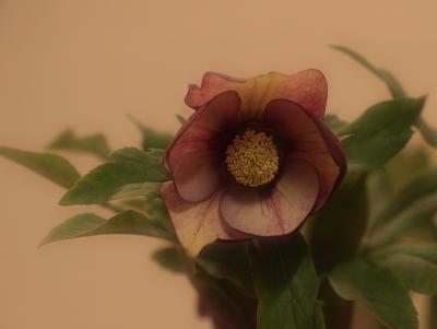 flower1009