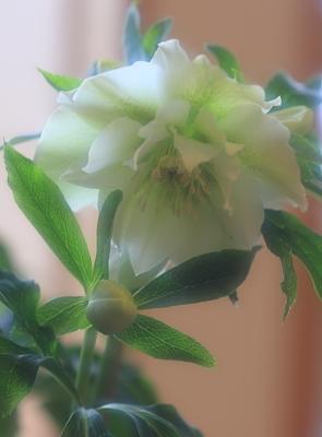 flower1015