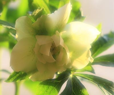flower1016