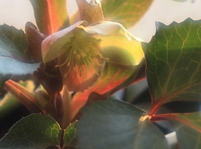 flower1019