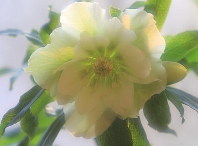 flower1020