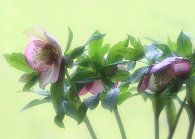 flower1022