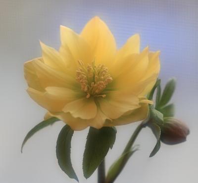 flower1023