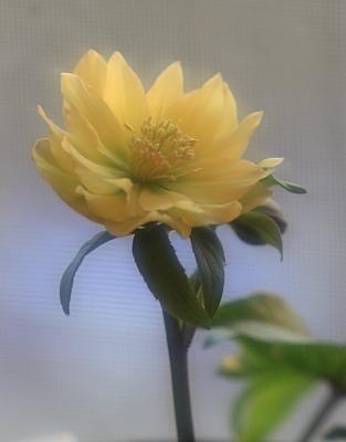 flower1024