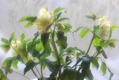 flower1025