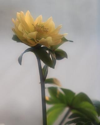 flower1026.
