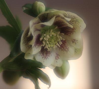 flower1027