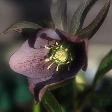 flower1028