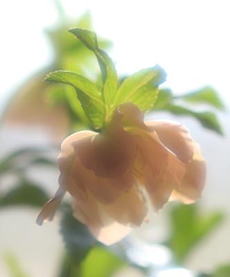 flower1040