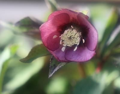 flower1045