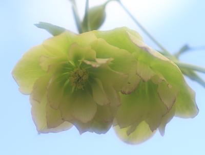 flower1050