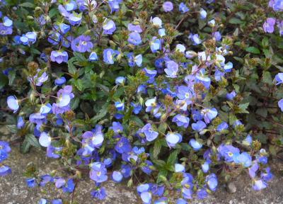 flower1054