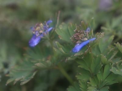 flower1055
