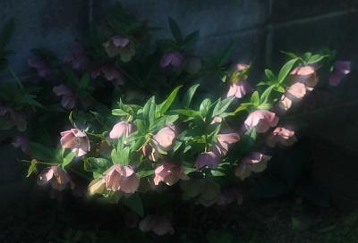 flower1058