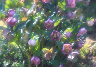 flower1059