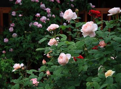 garden1013