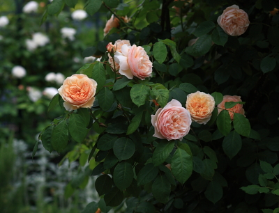 garden1015
