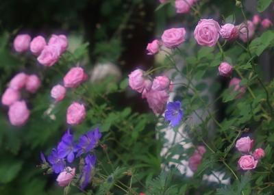 garden1018