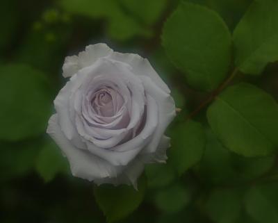 garden1019