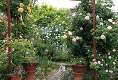 garden1021