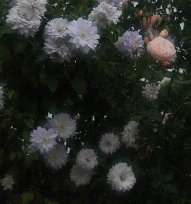 garden1023