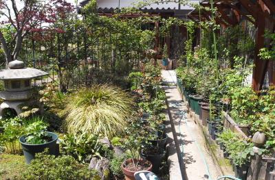 garden1028
