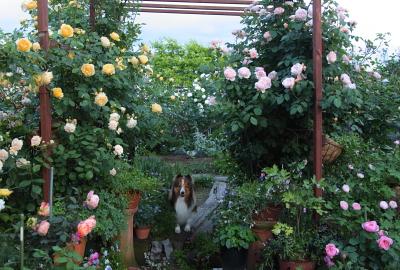 garden1100