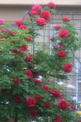 garden1101