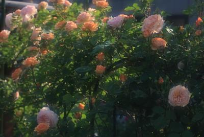 garden1102