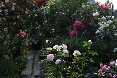 garden1105