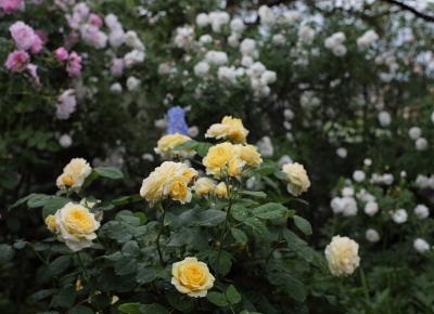 garden1106