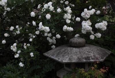 garden1107