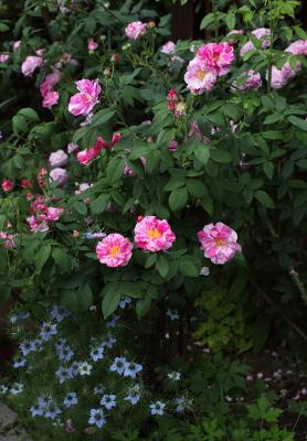 garden1108