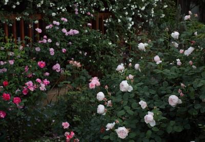 garden1109
